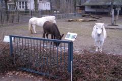 Tierpark-Dessau-120