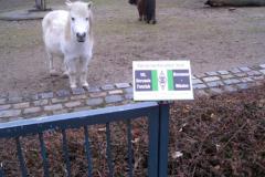 Tierpark-Dessau-122
