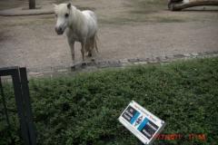 Tierpark-Dessau-123