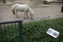Tierpark-Dessau-125