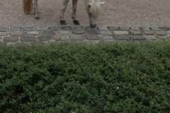 Tierpark-Dessau-126
