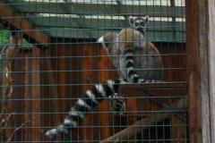 Tierpark-Dessau-128