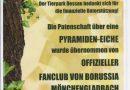 Baumpatenschaft Pyramiden-Eiche im Tierpark Dessau